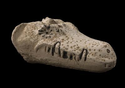 Cocodril una momia molt animal