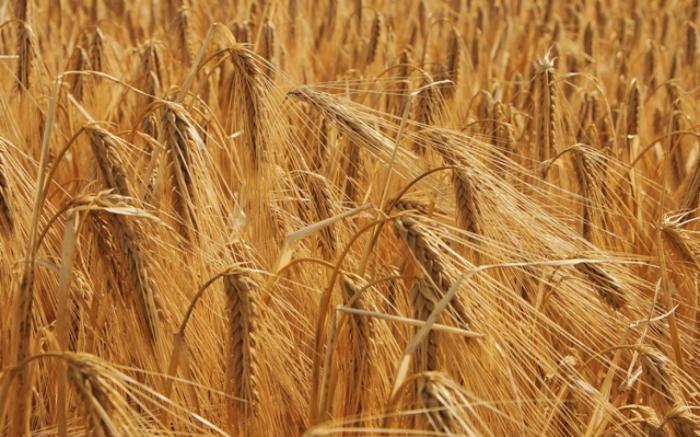 6_BOIX_Agricultura_origens