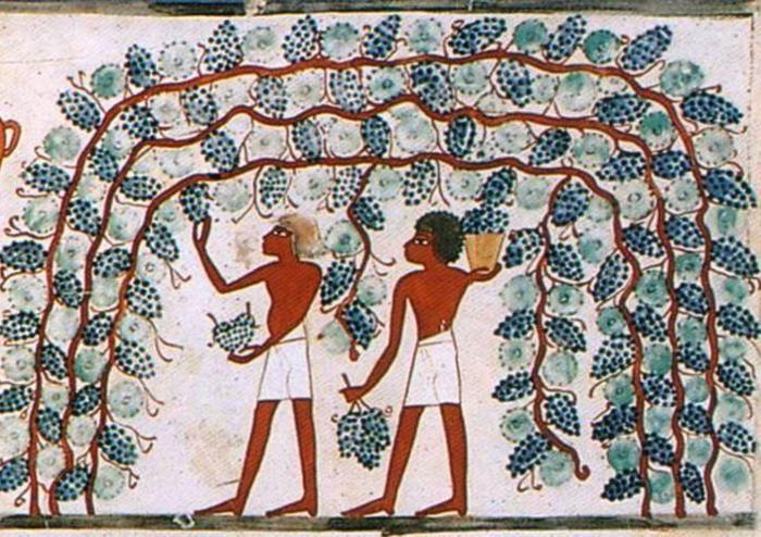 El vi a l'antic Egipte