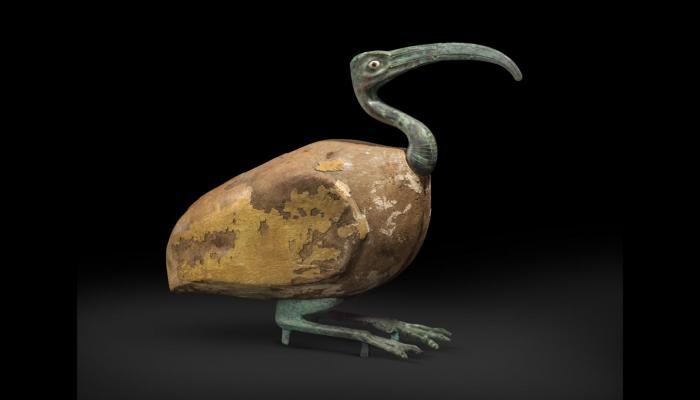 ibis animals sagrats